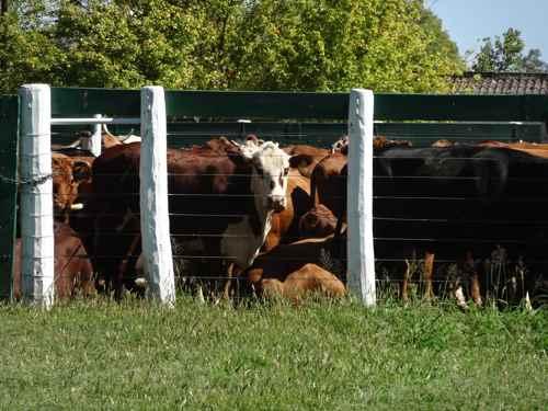 Trazabilidad animal: cómo puede mejorar la ganadería