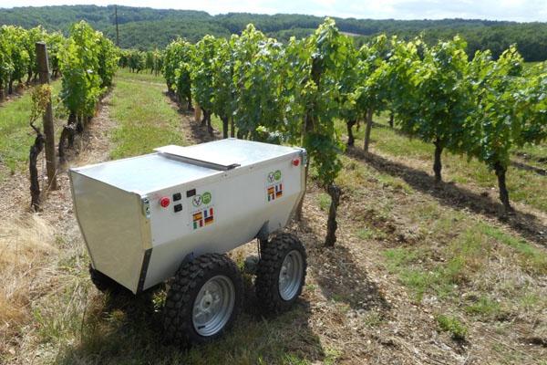 Empresa europea prepara robot para cartografiar viñedos