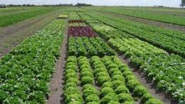El crecimiento de la agricultura regenerativa