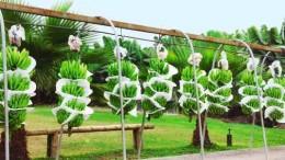 El trabajo ecuatoriano para mejorar la producción de banano
