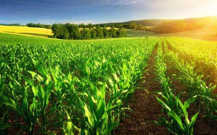 El gobierno colombiano busca impulsar proyectos tecnológicos para el agro