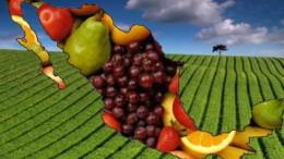 Crece en México la exportación de agroalimentos a Japón