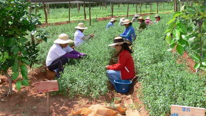 Colombia y su buen momento del agro