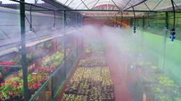 La nueva tendencia agrícola, los invernaderos orgánicos