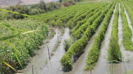 Perú trabaja pensando en el fenómeno de El Niño