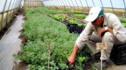 Argentina y su trabajo en energía solar para mejorar los suelos